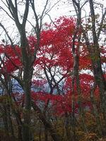 08.11.10s-komochiyama.03.JPG