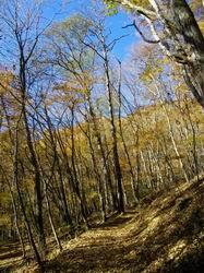 唐松林の道