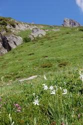高山植物の群落
